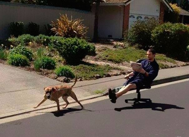 dog pulling man on chair
