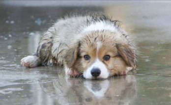 How to do Pet care in monsoons, Article from MARS, Dr. Kallahalli Umesh, Mars india, Pet Care