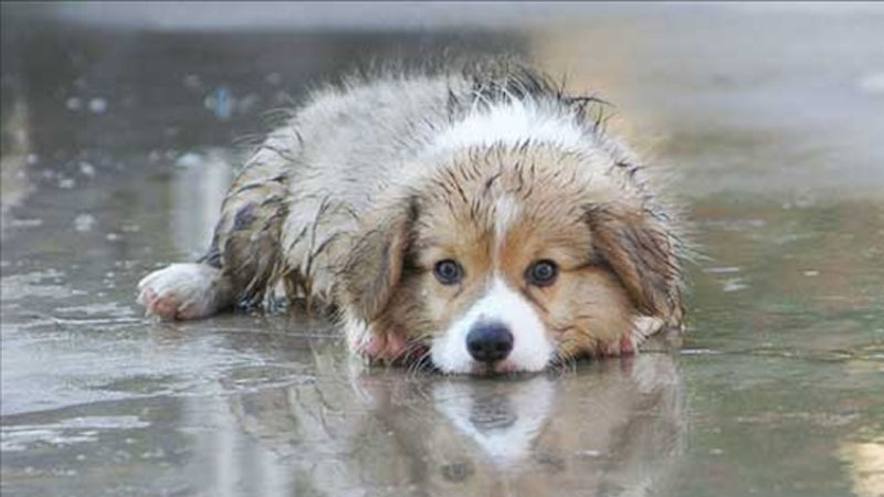 How to do Pet care in monsoons : An Article from MARS